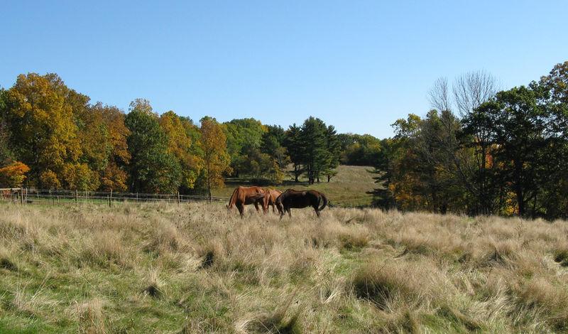 Horsesinbackpasture