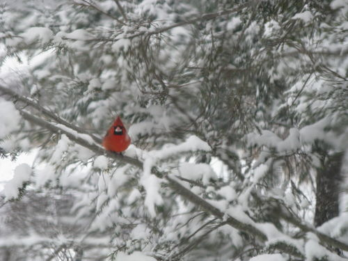 Cardinals 010
