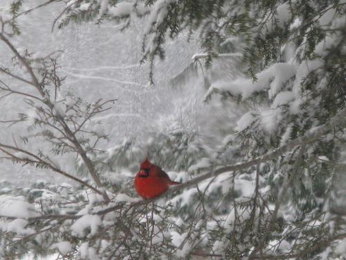 Cardinals 012