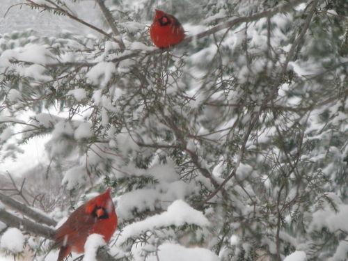 Cardinals 013