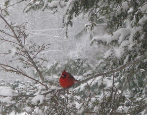 Cardinals 0122