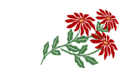 Poinsettia7000