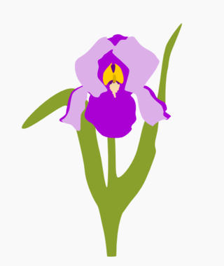 Iris2010