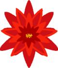 Poinsettiadesign