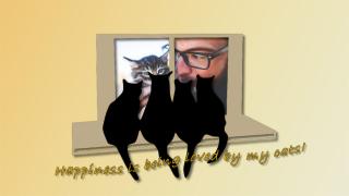 Cats on window sill